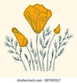 Orange poppy flower,vector  illustration