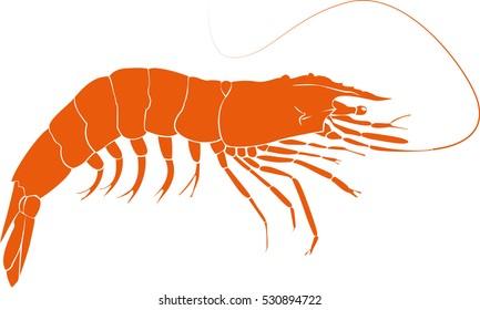 Orange Prawn Illustration