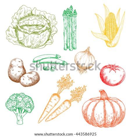 Carrots corn cob and squash