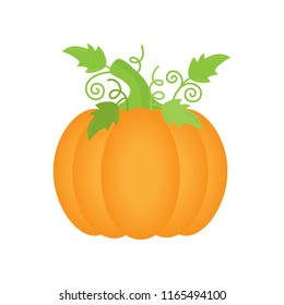 Orange pumpkin with green leaves and curly stems, vector illustration. Autumn halloween or thanksgiving pumpkin, vegetable graphic icon or print, isolated.