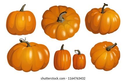 Orange pumpkin isolated on white. Realistic pumpkins. Set of orange pumpkins for Halloween and Thanksgiving decor.