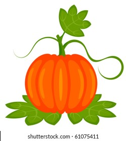 Orange pumpkin with leaves isolated. Vector illustration