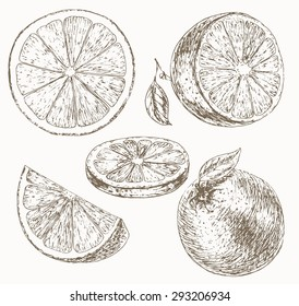 Orange set. Cut fruit. Hand drawn illustration of food sliced ingredients. Vector