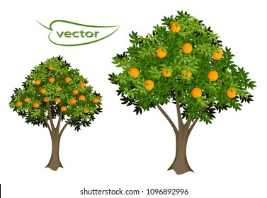 Orange and tangerine tree 3D vector realistic images, garden of fruit bearing plants with ripe fruit isolated to decorate the landscape of time of harvesting citrus trees.
