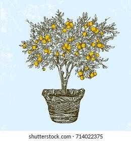 Orange tree in basket. Vintage style. Vector illustration