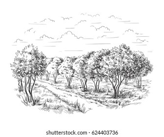 Orange - Orange tree Orange Park vector illustration sketch drawing
