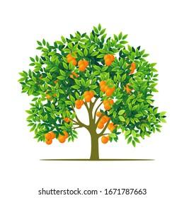 orange tree with white background. illustration vector