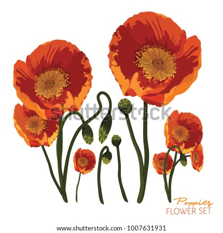 Orange yellow poppies flower arrangement on stock vector royalty orange and yellow poppies flower arrangement on a white background vector illustration mightylinksfo