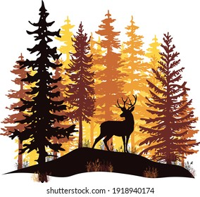 Orange and yellow sunset in coniferous forest. Deer with antlers posing on the hill covered with grass.