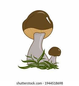 Orange-cap boletus mushroom illustration. Colorful nature. Fungi. Idea for decors, picture in frame, gifts, ornaments, celebrations, invitation, greeting, logo, autumn holidays, environment themes.