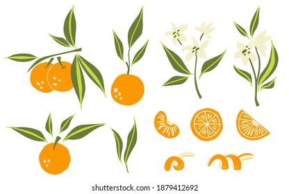 Oranges set. Exotic tropical orange citrus fresh fruit, whole juicy tangerine with green leaves and flowers, slice and orange peel, vector cartoon minimalistic style isolated illustration - Shutterstock ID 1879412692