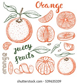 Oranges  sketch.Vector hand drawn vintage fruits ,leaves. Sketch vector and lettering, vegetarian food illustration.Retro outline style. Isolated slices, orange fruits.Organic colored background