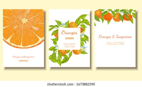 Oranges and  tangerines with flowers and vector fruit template background. Citrus collection card, postcard, label.
