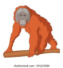 Orangutan icon. Cartoon illustration of orangutan vector icon for web