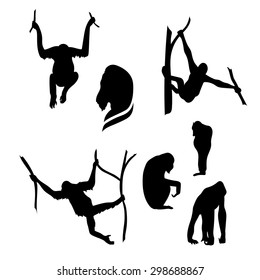 Orangutan monkey vector icons and silhouettes. Set of illustrations in different poses.