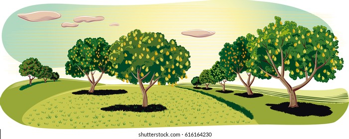 Orchard with pear trees.