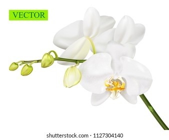 Orchid branch isolated on white background. Vector illustration.
