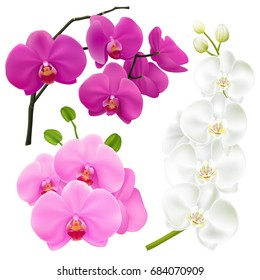 Orchid branches with colorful flowers 3 realistic images set in pink magenta purple and white vector illustration