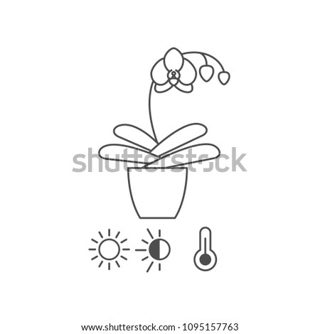 Orchid Care Instructions Line Icon Stock Vector Royalty Free