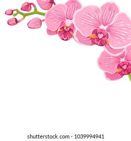 Orchid floral branch corner frame decoration border element template. Bright pink purple phalaenopsis exotic flower bloom blossom bouquet isolated on white background. Vector design illustration.