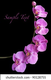 Orchid flower blossom vector