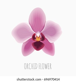 Orchid Flower. Floral Print. Vector blooming tropical plant.