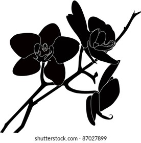 Orchid flower it is isolated