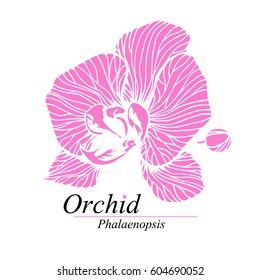 Orchid flower sign, logo. Phalaenopsis blossom. Hand drawn vector illustration isolated on white.