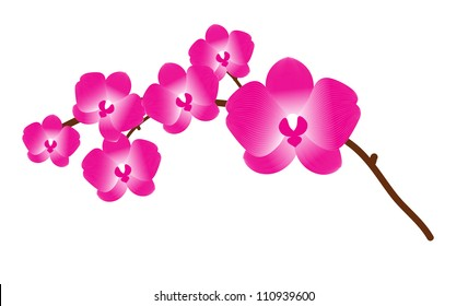 Orchid flower vector background for design