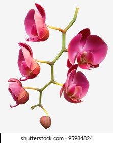 Orchid flower vector background design
