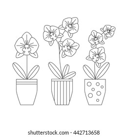 Orchid flower vector icon isolated. Set of house plants in pots. Phalaenopsis made in line style.