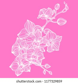Orchid flower vector illustration with watercolor background