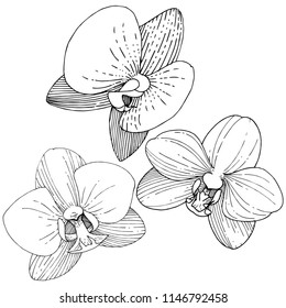 Orchid flower in a vector style isolated. Full name of the plant: orchid. Vector flower for background, texture, wrapper pattern, frame or border.