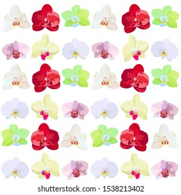 Orchid flowers of different colors and different shapes. Set of different flowers of orchids.
