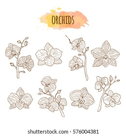 Orchid flowers hand drawn set.