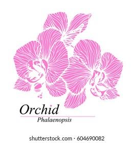 Orchid flowers. Phalaenopsis blossom. Hand drawn vector illustration isolated on white.