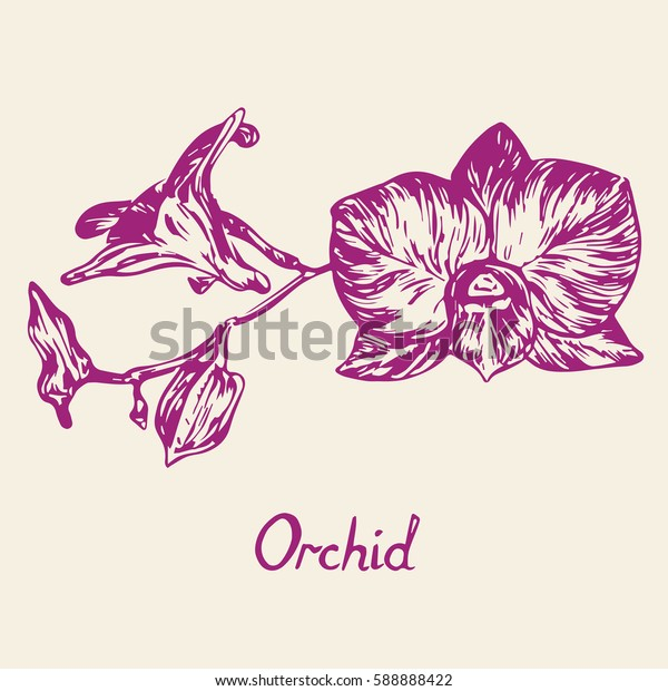Orchid flowers set, with inscription, hand drawn doodle, sketch in pop art style, isolated vector illustration (purple)