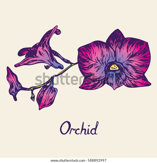 Orchid flowers set, with inscription, hand drawn doodle, sketch in pop art style, isolated vector illustration (purple, pink, blue)