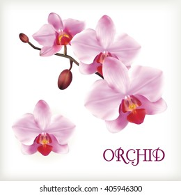 Orchid flowers set on the white, vector illustration