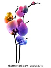 Orchid isolated flower. Vector, EPS10.