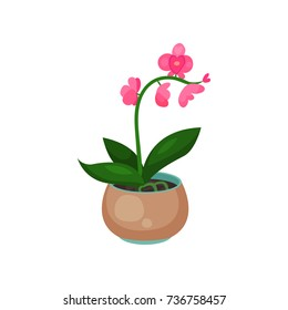 Orchid Phalaenopsis houseplant, potted flower vector illustration
