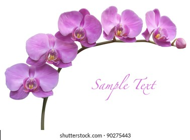 Orchid spa flower vector illustration
