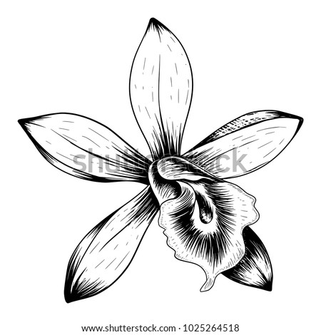 Orchid Tattoo Flower Isolated On White Stock Vector Royalty Free