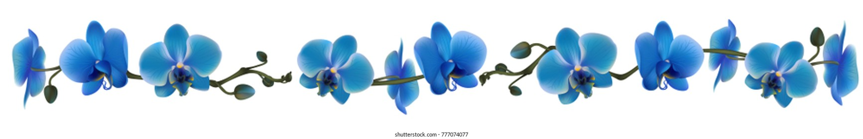 Orchid. Tropical flowers. Floral vector background. Blue. Horizontal pattern.