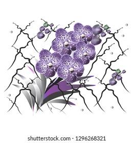 orchid vanda with perls, vector illustration