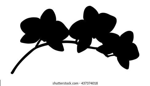 Orchids flowers it is isolated. Black isolated