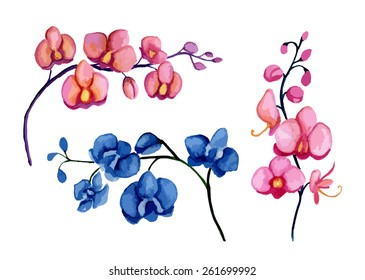 Orchids. Watercolor. Vector illustration
