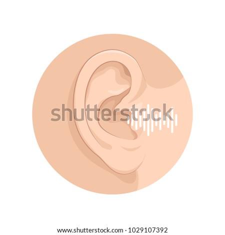 Organ Senses Hearing Man Anatomy Human Stock Vector Royalty Free