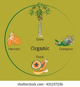 Organic food vector with papaya tree