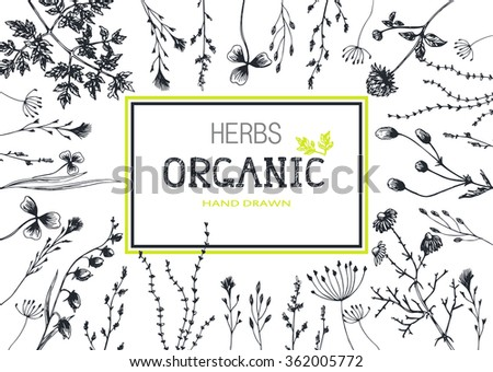 Organic Frame Hand Drawn Herbs Background Stock Vector (Royalty Free ...